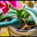 От тази домашна тор даже най-капризните ми орхидеи пощуряха от цъфтеж:
