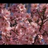 Синоптиците дадоха прогнозата си за времето през целия април