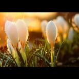 Хороскоп за днес, 14 март: РАК - доверете се на инстинкта, ДЕВА - нови възможности, СКОРПИОН - силни емоции
