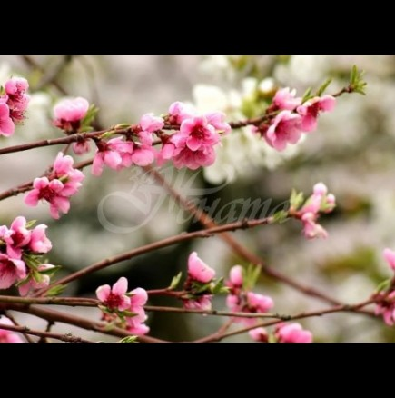 Хороскоп за утре 31 март-СКОРПИОН Позитивизъм и успехи, ЛЪВ Сполучлив ден
