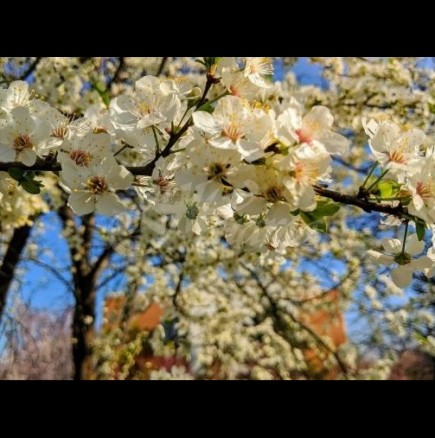 Седмичен хороскоп за периода от 30 март до 5-ти април-ВОДОЛЕЙ Нови делови възможности, ОВЕН Благодатен период