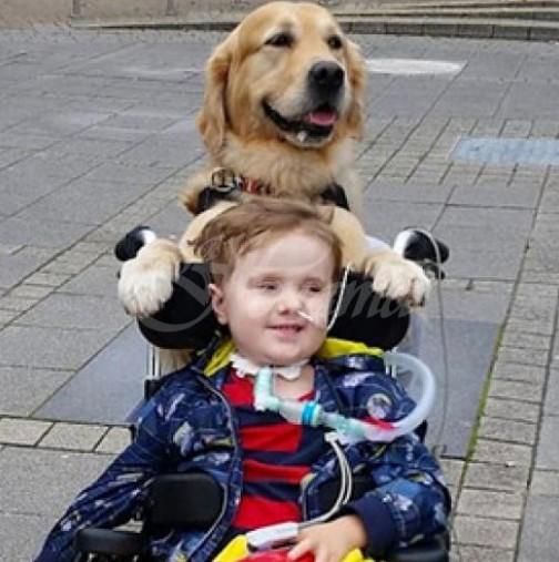 Куче излекува умиращо дете