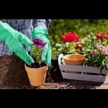 Как правилно да пресадим цветята през пролетта, за да полудеят и да ни радват с цвят: