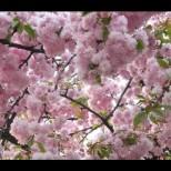 Хороскоп за утре 9 април-ВЕЗНИ Успешен ден, ОВЕН Обновете хармонията