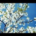 Хороскоп за утре 2 април-СТРЕЛЕЦ Благоприятни възможности, ЛЪВ Добри новини