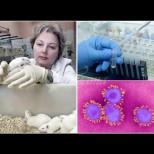 Руски учен хвърли бомбата със сензационна теория: Ето как е създаден коронавирусът и как да го спрем!
