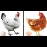 Бели или кафяви? Ето кои яйца са по-полезни и какво да изберем в магазина: