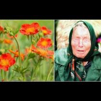 Билката на баба Ванга за отслабване е помогнала на хиляди. Ето рецептата: