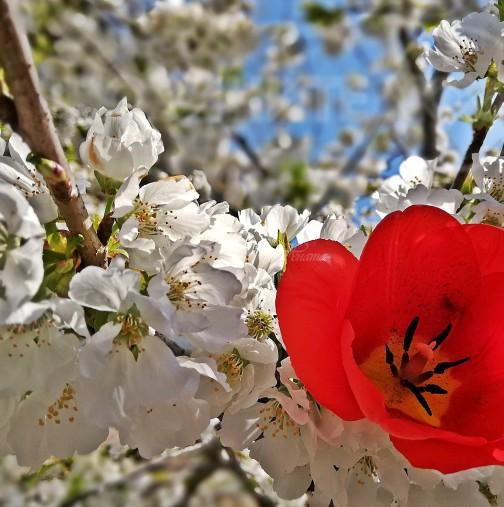 Хороскоп за утре, 4 април-РИБИ Парите са с вас, ВОДОЛЕЙ Действате дръзко