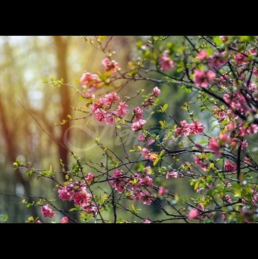 Хороскоп за утре 1 април-КОЗИРОГ Шанс за печалба, ВЕЗНИ Сполучлив ден
