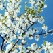 Хороскоп за утре 8 април-ВОДОЛЕЙ Успехи,  РАК Навременна подкрепа