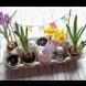 Идеи за украса от кори за яйца - евтино и ефектно: