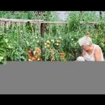 Захарта, солта и чесънът успешно ще заменят химията в градината и увеличават добивите с една трета-Рецепти