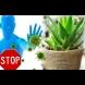 5+1 стайни растения, които засилват имунитета - пазят ни от вируси и бактерии: