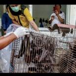 Китай направи шокиращо признание: Коронавирусът не беше от пазара в Ухан