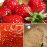 Задължително слагайте ягодите в солена вода преди да ги консумирате ако искате да се отървете от малките червейчета в тях-Видео