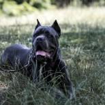 Голямо куче нахапа дете
