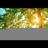 Хороскоп за утре 4 юни- РАК Преодоляване на проблеми, ЛЪВ Твърде неприятен ден