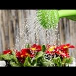 Твърдата вода е смърт за растенията - ето как да я омекотим с подръчни средства за по-бърз растеж:
