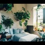 Оазис в спанята - цветята, които пречистват въздуха и подобряват съня ни: