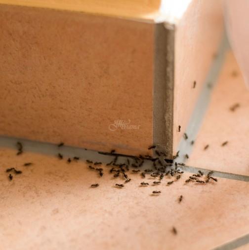 10 бързи начина за справяне с мравките