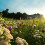 7 красиви български имена празнуват имен ден утре-Връзват се китки с червен конец, прави се нещо специално за здраве и благополучие