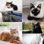 Как да изберем котка, така че да привлечем късмет, щастие и финансова стабилност в къщата