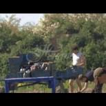 Британците закъсаха с брането на реколтата-Няма ги българите-Видео