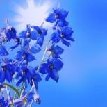 Месечен хороскоп юли 2020-Овен, просперитет и самочувствие, Близнаци-време за нов старт