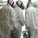 Тревога в Китай-Плъхове заразяват хората с нов щам на хепатит Е