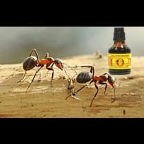 С 1 шишенце йод се спасявам за цяло лято: пръскаш и от мравките няма следа на следващия ден!