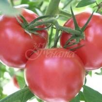 Вредата от доматите-Много хора не бива да ги ядат
