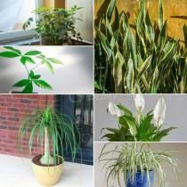 15 стайни растения, които са много, много трудни за убиване дори от вас