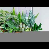 Растенията, които изсмукват късмета и привличат бедността в дома - веднага ги разкарайте от вкъщи!