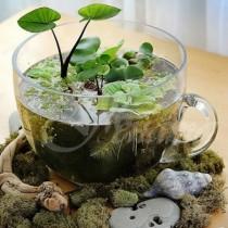 16 идеи как да си направим водна саксия за вкъщи или градината (снимки)