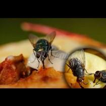 Ето какви ужасни неща се случват с храната ни, когато муха кацне върху нея: