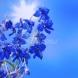 Седмичен хороскоп за периода от 13 до 19 юли-ВОДОЛЕЙ Сбъдване на желания, ВЕЗНИ Добри условия за напредък