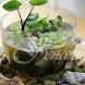 16 страхотни идеи за водни саксии за вашата градинка у дома (Галерия)