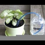 Тръгнем ли на почивка, първа грижа са цветята: С този хитър метод се поливат сами и издържат до 4 седмици!