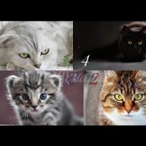 Предсказване на късмета с котка-Изберете едно от котетата и разберете какво да очаквате от следващата седмица