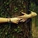 Какво дърво трябва да бъде прегърнете за здраве и благополучие в семейството-Топола за главоболие, Смърч за нервите