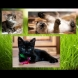 Избери най-сладкото котенце и ще узнаеш истината за себе си: