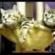 Неустоимо видео с котета