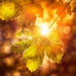 Есенното равноденствие през септември носи късмет и просперитет ако извършите специален ритуал