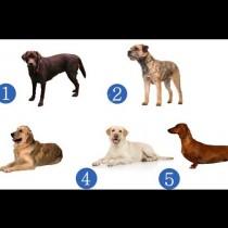 Предсказание с куче-Изберете и разберете какво ще ви прошепне-Каква изненада ви е подготвила съдбата през втората половина на 2020 г.