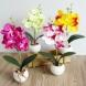 Орхидеята мощно влияе на енергията на дома! Ето какво трябва да знаете, ако имате в къщи: