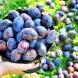 11 причини, жените да ядат по-често сини сливи