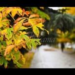 """Есенното равноденствие на 22 септември ще раздели живота на 3 зодии на """"преди"""" и """"след"""