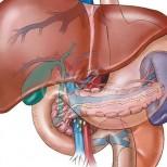 Нито едно хронично заболяване не може да се излекува без затопляне на черния дроб. За да живеете дълго - затопляйте го редовно!