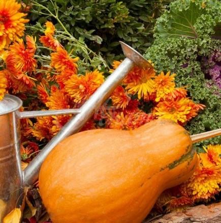 Хороскоп за днес 20 септември-Рак-романтични приключения, Стрелец-прекрасни часове и постигане на жадувана цел